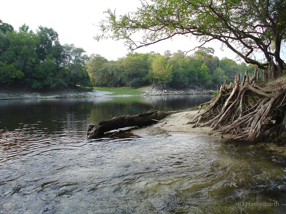 Suwanee River by HD Hasselbarth