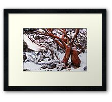 Snow Gum Framed Print