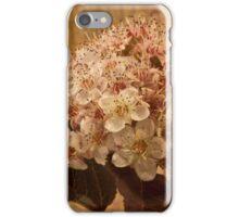 Bronze Leafed Spirea Blossom Macro  iPhone Case/Skin