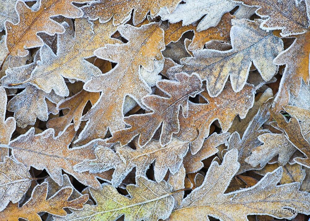 Frosty Oak Leaves by grandaded