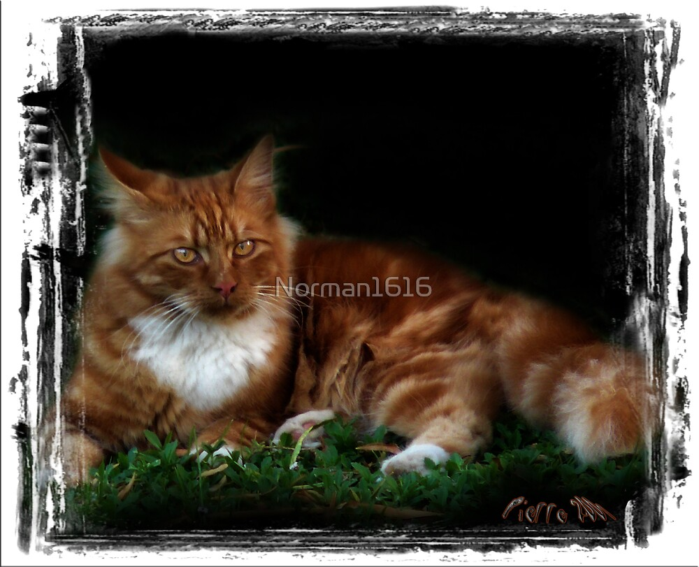 Ginger by Norman1616