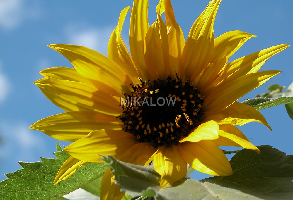 Sunflower by MIKALOW