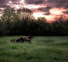 Broodmares at Dawn by irolita