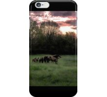 Broodmares at Dawn iPhone Case/Skin