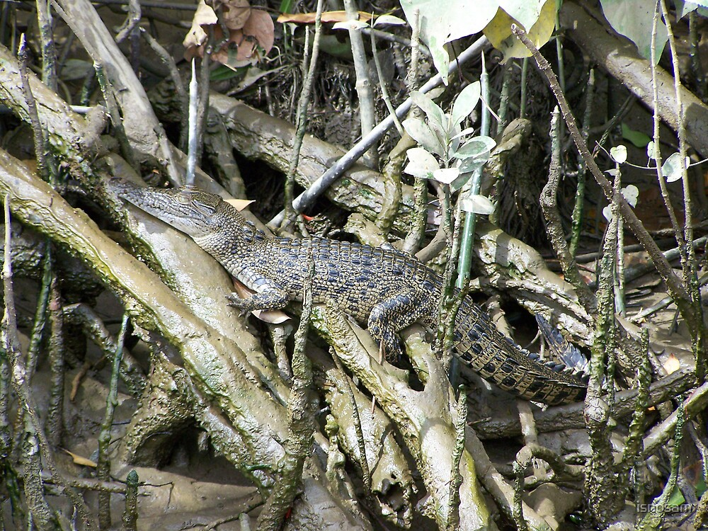 Saltwater Crocodile by isnosam