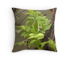 Plant Stem Growing on Tree Throw Pillow