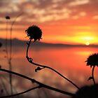 Sunset Silhouette by Gene Praag