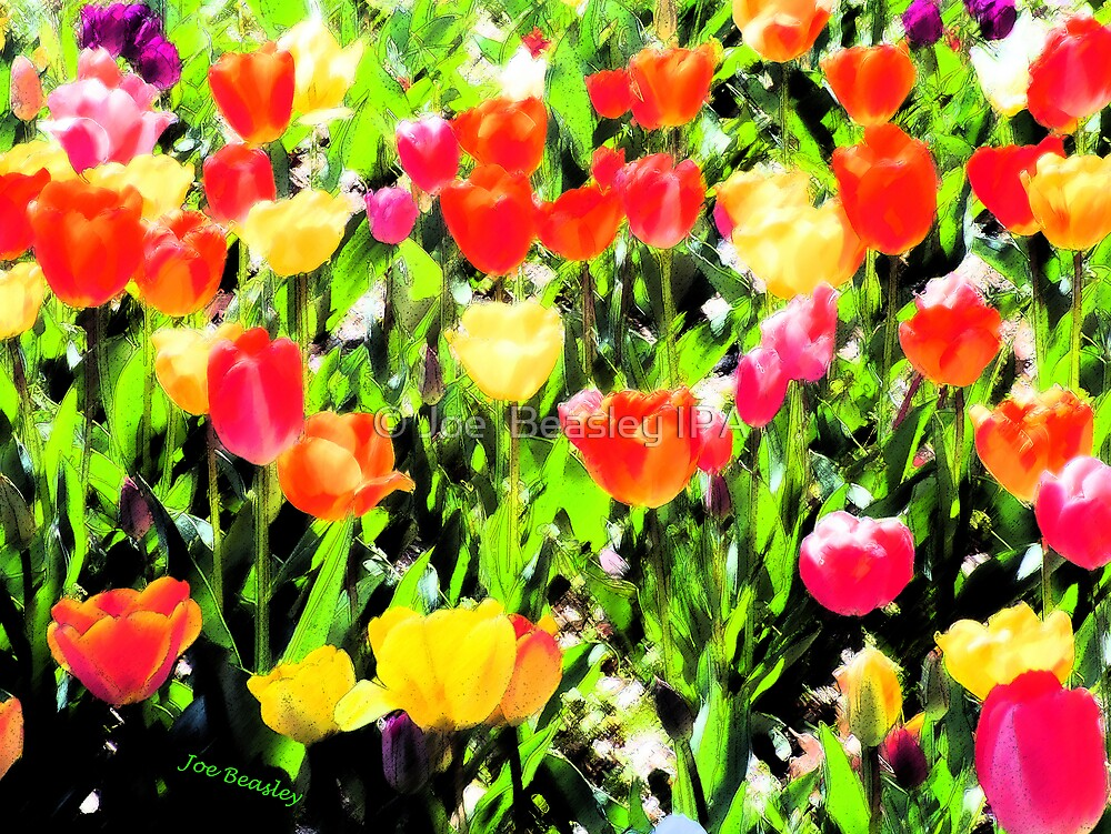 Tulips  by © Joe  Beasley IPA