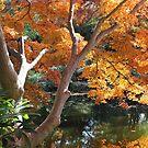 Golden Pond by Vivian Sturdivant