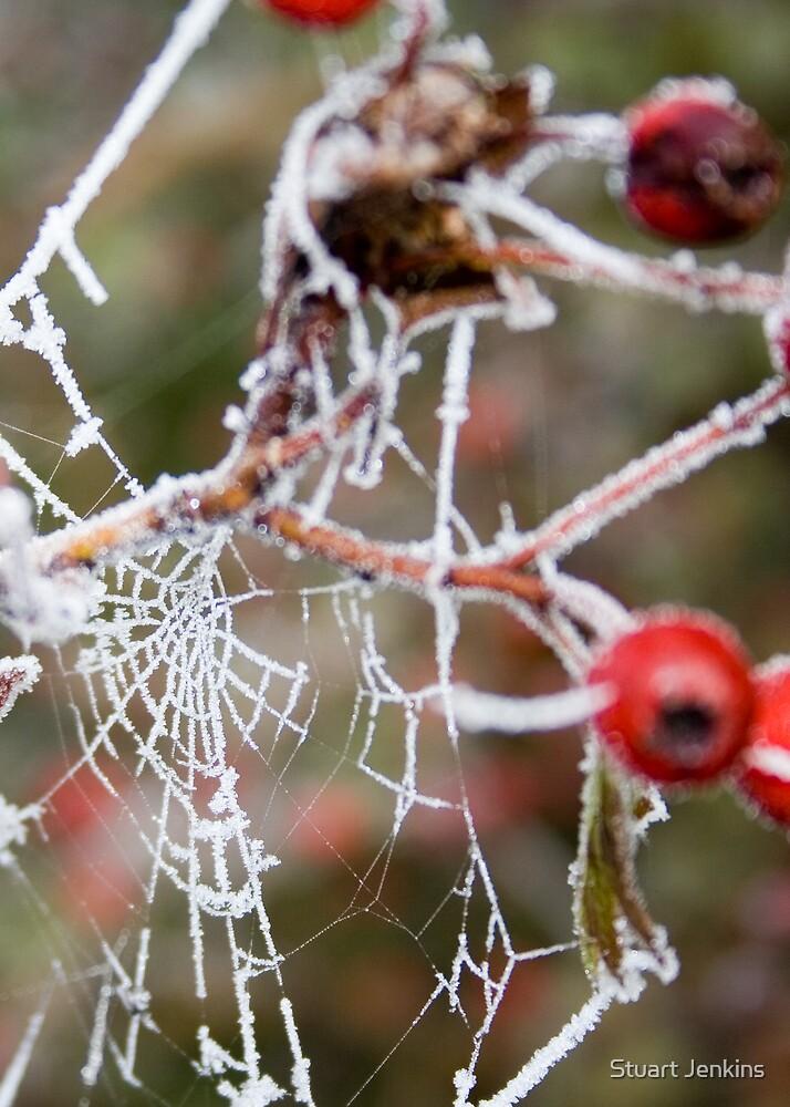 Frost by Stuart Jenkins