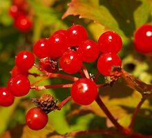 Ruby Berries by kalaryder