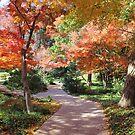Autumn Path by Vivian Sturdivant
