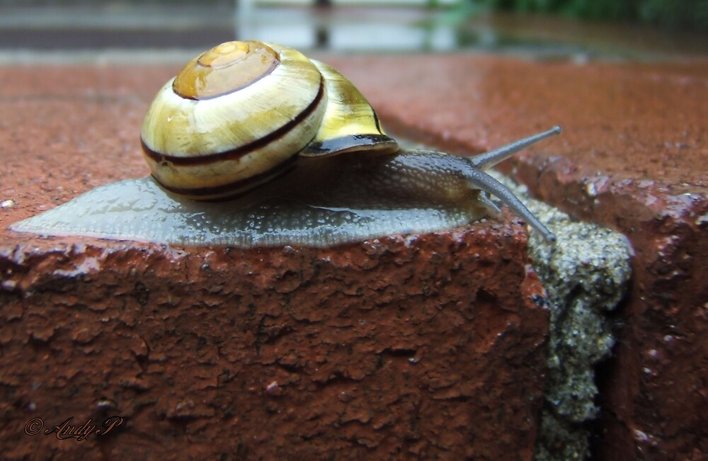 Scurrying Snail by Andy2302