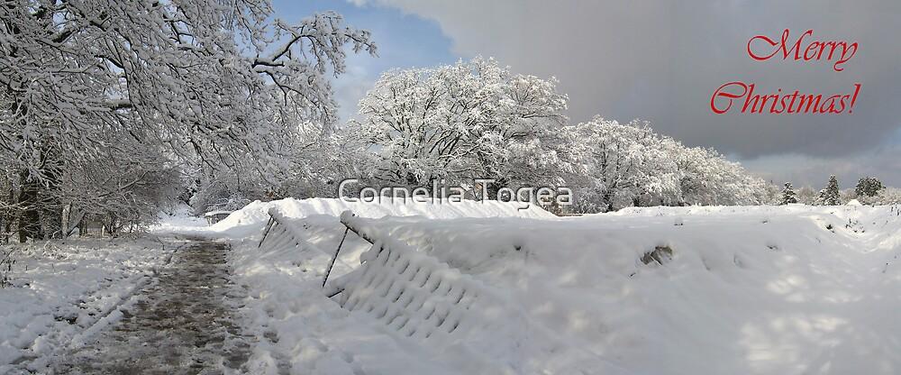 Christmas panorama by Cornelia Togea