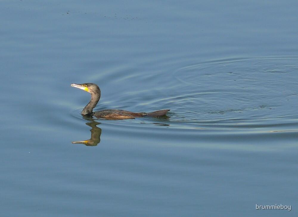 Reflective cormorant by brummieboy