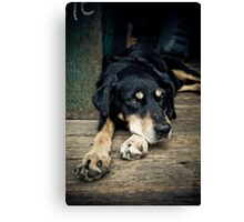 Tom Canvas Print