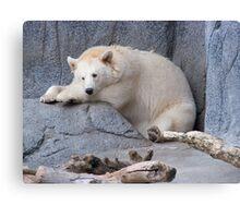 White Black Bear Blues Canvas Print