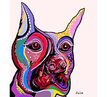DOBERMAN Photographic Print