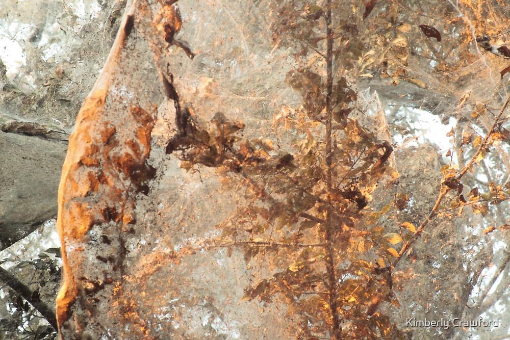 Tawakoni Spider Tree by Kimberly Crawford