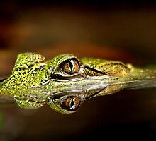 Gator Eyes by Lance Leopold