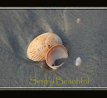 Shells by Mauigirl91