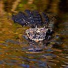 Dark Water Predator by DawsonImages