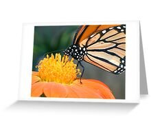 Monarch Butterfly sip nectar from a Daisy flower Greeting Card