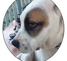 Max The Dog by Kara  Davison