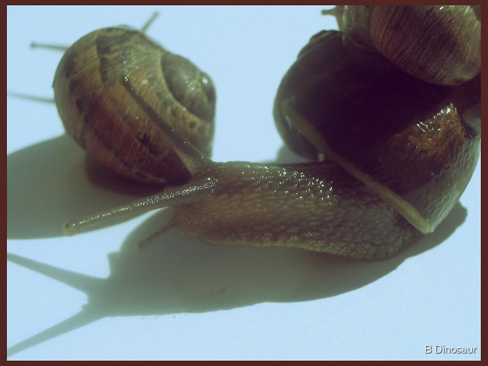 Snails by Bryan Davidson