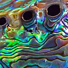 Paua Shell by Robyn Carter