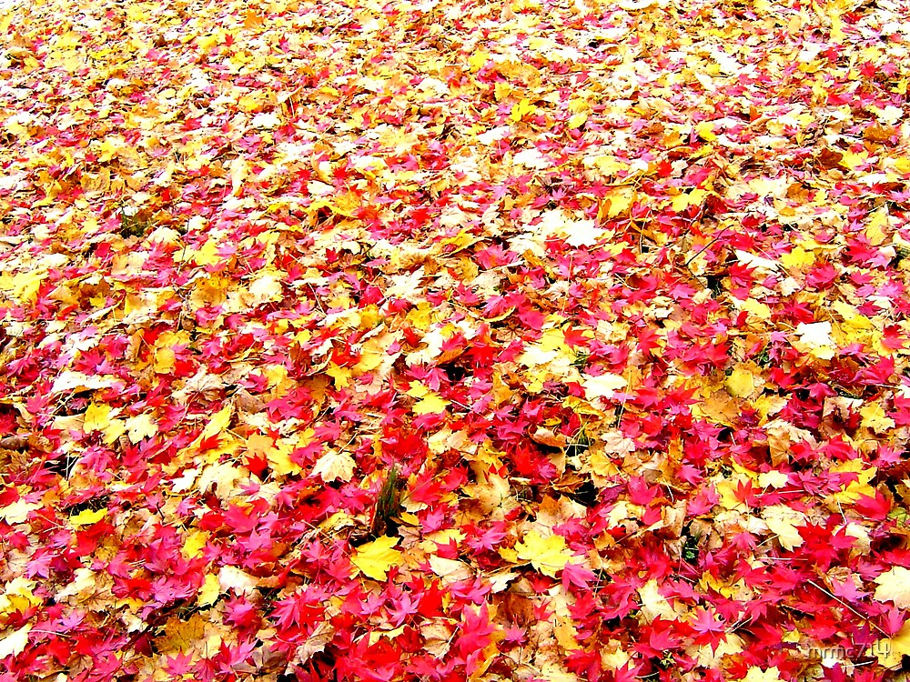 fall leaves by mrmc714