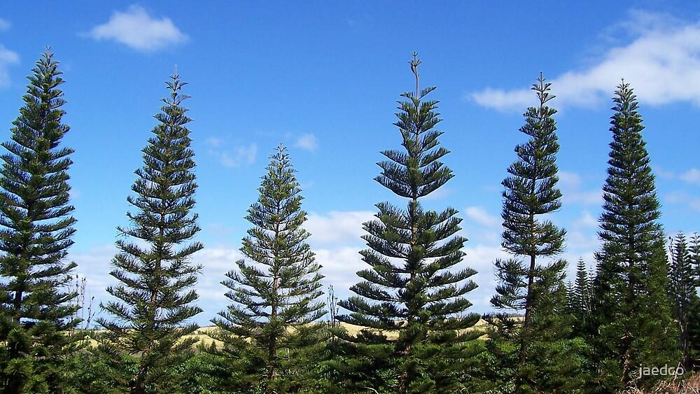 Tree-Lined Road on Oahu by jaedco