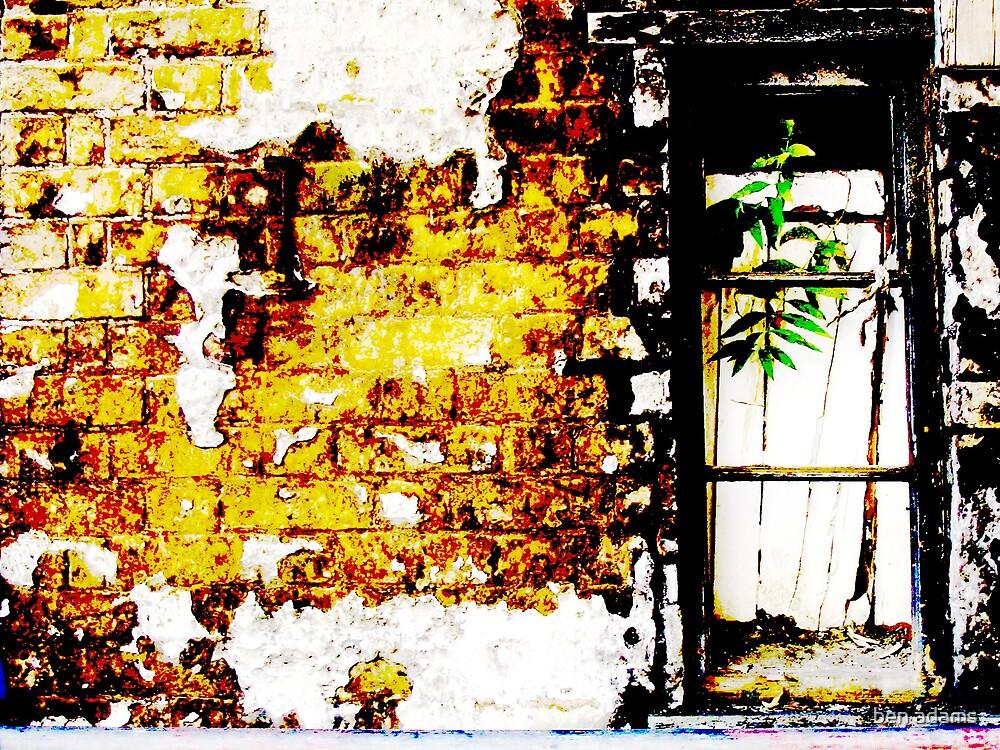 plant&window by ben adams