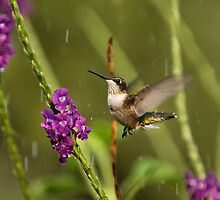 Jesus Send The Rain by hummingbird