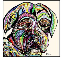Colorful Boxer Photographic Print