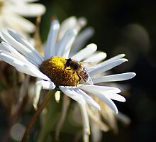 Bee Motivated by Michael Devaney