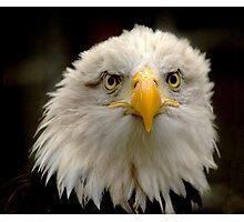 Sea Eagle Photographic Print