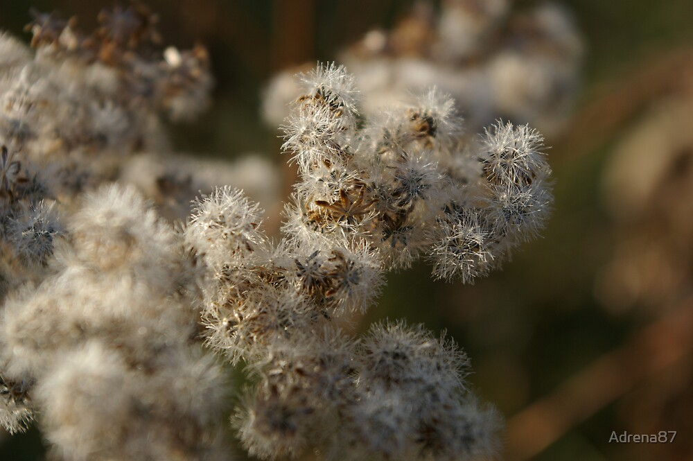 Weed Seed by Adrena87