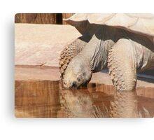 Tortoise Metal Print