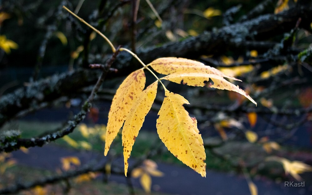 Autumn #1 by RKastl