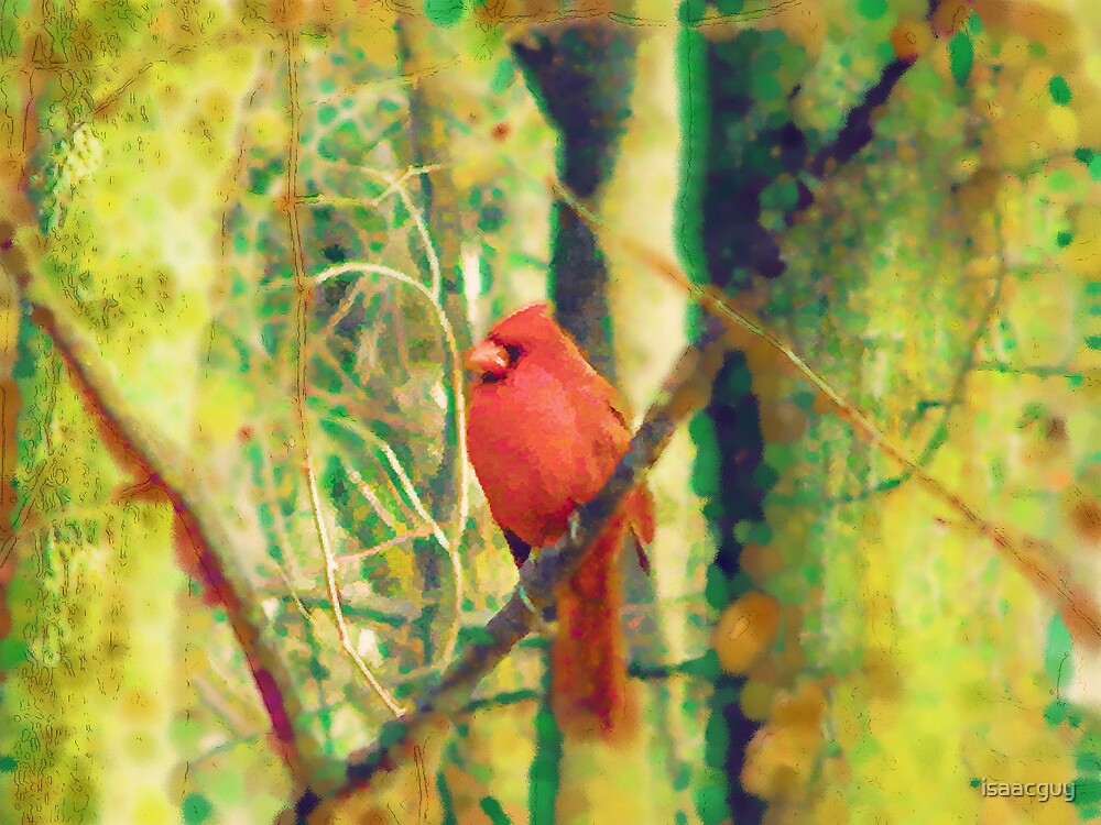 Cardinal with a broenk heart by isaacguy
