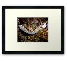 Nudibranch on Steroids Framed Print