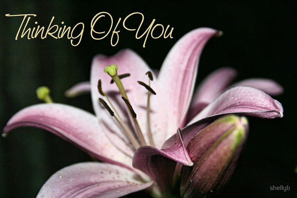 Thinking of You Lily by shellyb