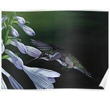 Hummingbird 3 Poster