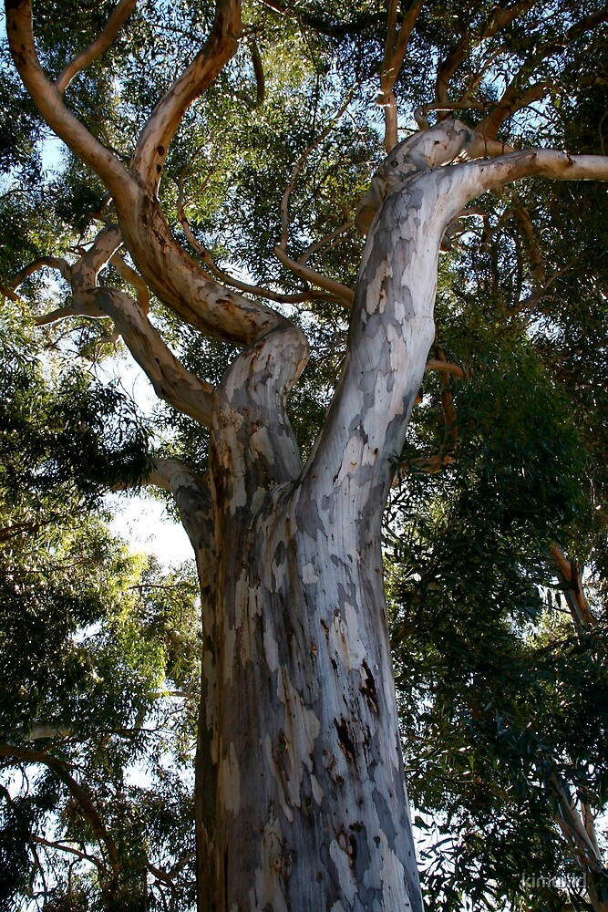 Tree Twist by kimwild