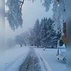 Snow Haze by Stacy Colean
