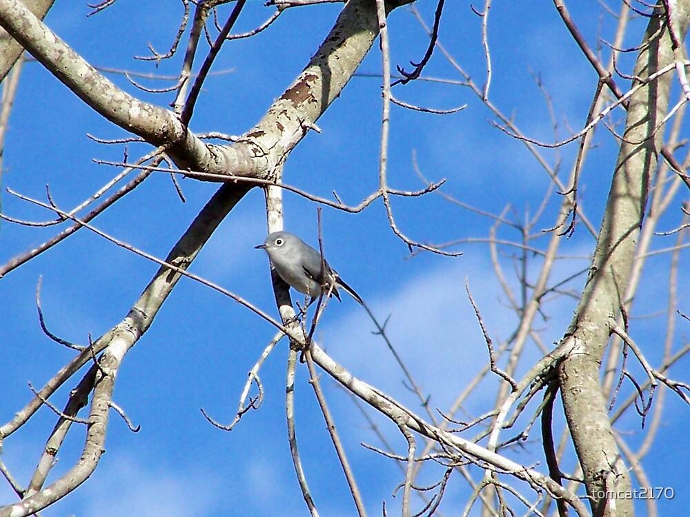 perky little bird by tomcat2170