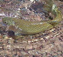 Montana Trout by montana16