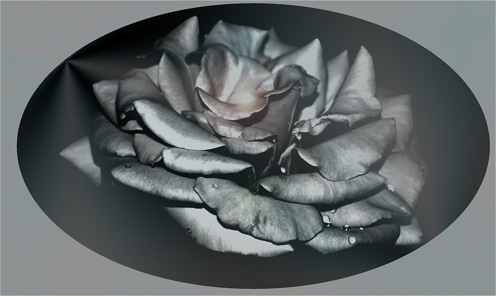 A simple rose by dewinged