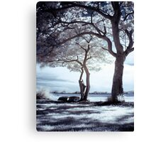 Shadows & Light Canvas Print